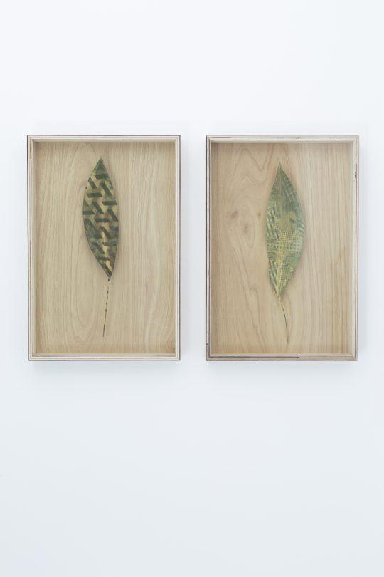 2 x unique anthothypes (chlorophyllian photographic process), \r<br>tree leaves, anti-UV glass, wood \r\n60 cm x 50 cm each\t\t\r\n\r\nPhoto: Pablo Ocqueteau